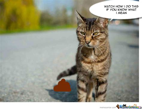 How To Stop A Cat From Pooping On The Floor by Pooping Cat By Recyclebin Meme Center