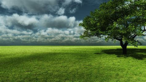 asus wallpaper tree lonely green tree wallpaper 3113