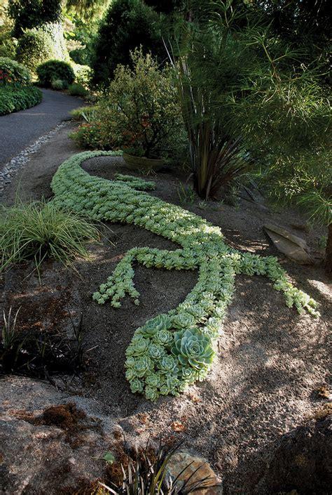 foto giardino un giardino di piante grasse 20 esempi stupendi da cui