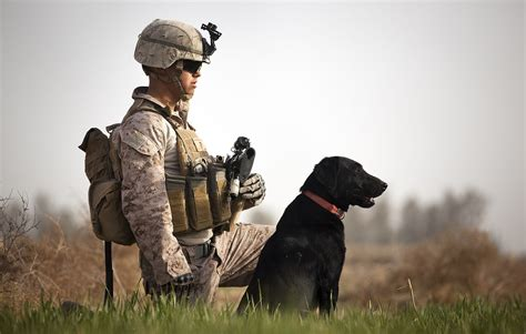 war dogs 17 photos that show the bravery of working dogs