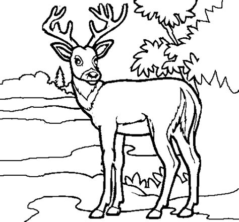 running deer coloring page free coloring pages of fox running