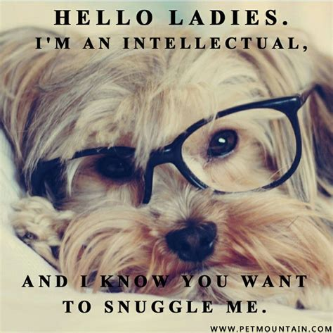Dog With Glasses Meme - site unavailable