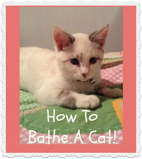 how to give a a bath how to bathe a cat hairstyles for princess hairstyles