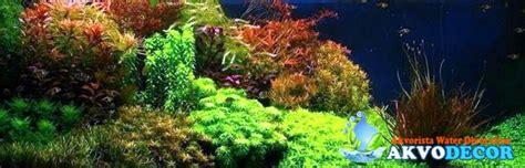 Jual Lu Aquascape Murah jual aquascape murah di tangerang