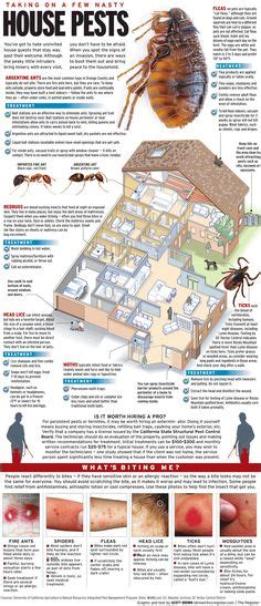 bed bugs bites google search bedbug prevention pinterest