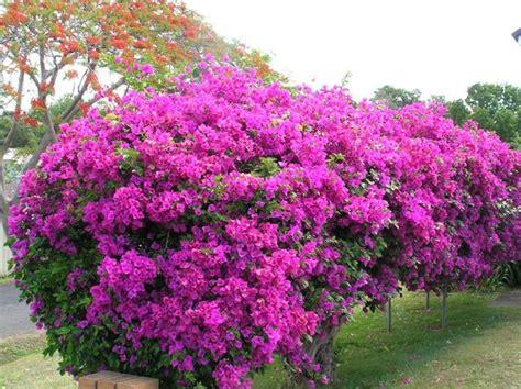 Arbuste Fleuri Feuillage Persistant by Les 25 Meilleures Id 233 Es De La Cat 233 Gorie Haie Persistant
