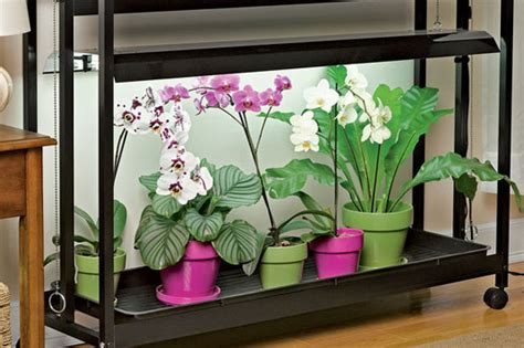 led grow lights for orchids how to grow orchids growing orchids orchid care