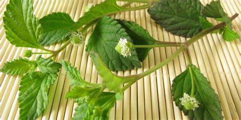 fiori eduli elenco fiori commestibili l elenco completo di fruttaweb