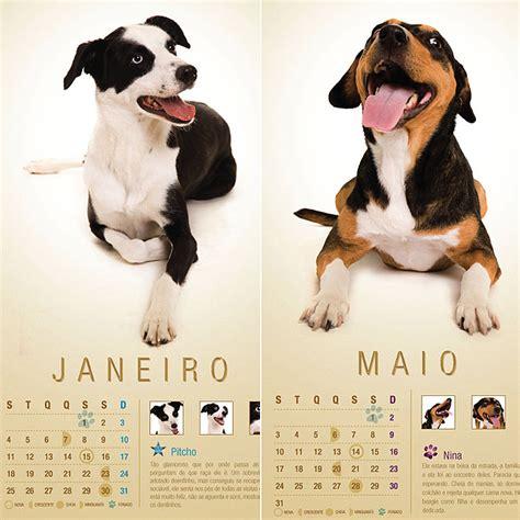 Calendario De Cachorro Em Cliques Profissionais Vira Latas Viram Estrelas De