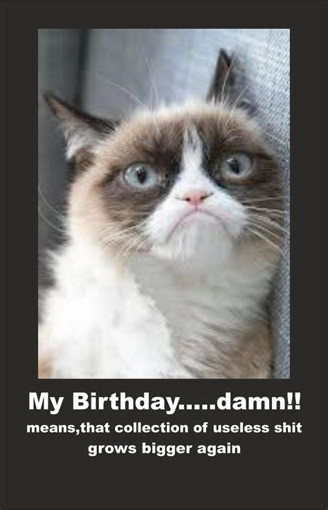 Happy Grumpy Cat Meme - image 614122 grumpy cat know your meme