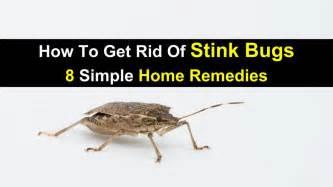 Best Way To Get Rid Of Flies In Backyard 28 How To Get Rid Of Backyard Flies The Ultimate Guide