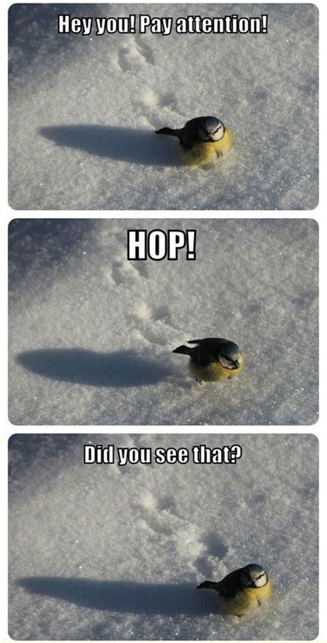 Stupid Animal Memes - 30 funny animal captions part 12 30 pics amazing