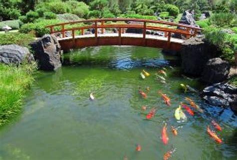giardino koi giardino giapponese koi scaricare foto gratis