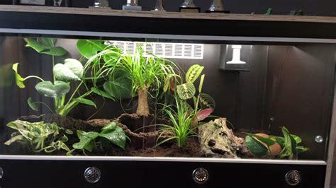 terrarium len reptielenforum onderwerp nieuw terrarium rode