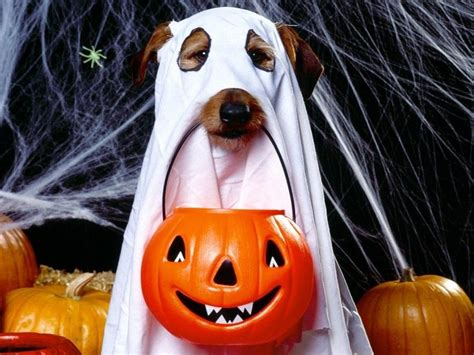 ghost costume for dogs strange costumes ghost with pumpkin