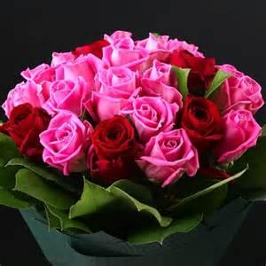 rosas rojas related keywords suggestions for imagenes rosas rojas