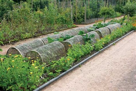 Garden Protection by How To Make Cheap Garden Beds Organic Gardening