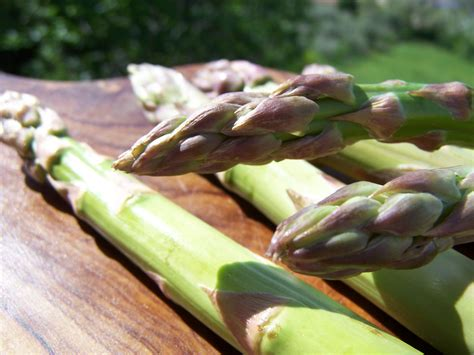 come cucinare gli asparagi coltivati asparagi supplea