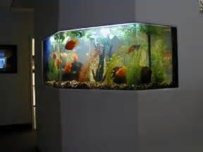 aquarium design by michael 119 best images about aqu 193 rios aquarium on pinterest