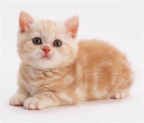 wallpaper kucing bergerak untuk pc ini mengapa sebabnya kucing jadi binatang kesayangan nabi