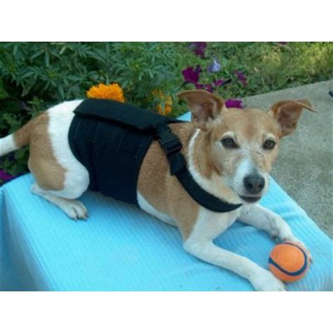 belly bands for dogs happy belly bands product review