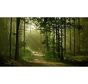 Landscape Nature Anime Trees Forest Path Sun Rays