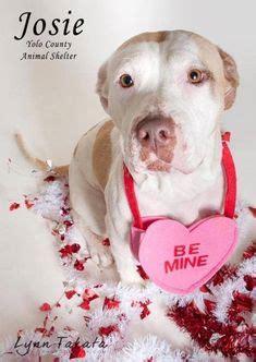 pet adoption marketing ideas images