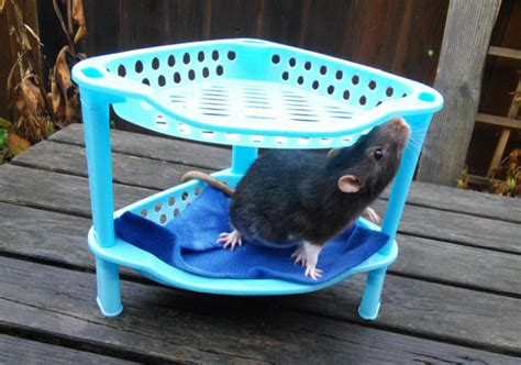 best bedding for rats best bedding for rats 28 images 277 best more small