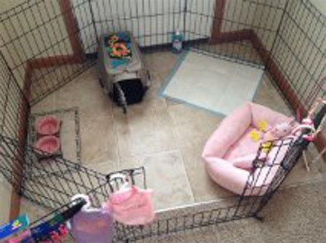 yorkie playpen 17 best ideas about teacup yorkie on mini yorkie yorkie puppies and