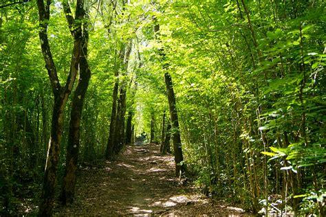 Free photo rainforest martinique caribbean free image on pixabay 1405766