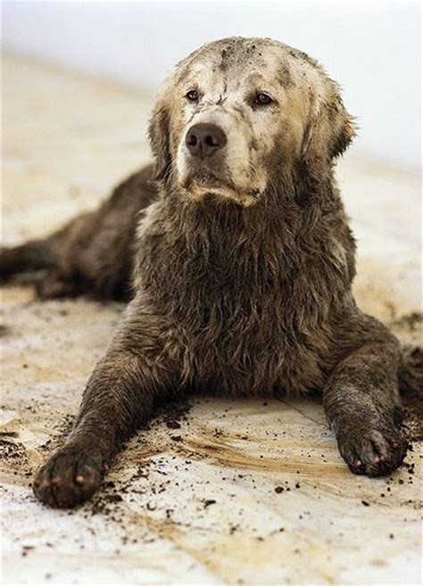 bruce weber golden retrievers beautiful photo by bruce weber animals dogs golden retrievers puppy bruce weber