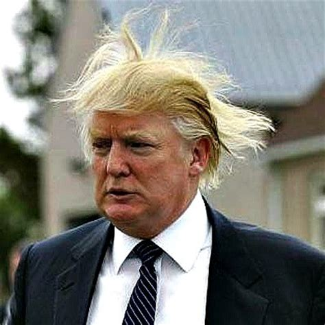 Donald Hairclip cratering in the polls in new hshire and iowa
