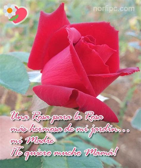 rosas para mi madre imagui felicitando a mam 225 con 140 caracteres en twitter y facebook