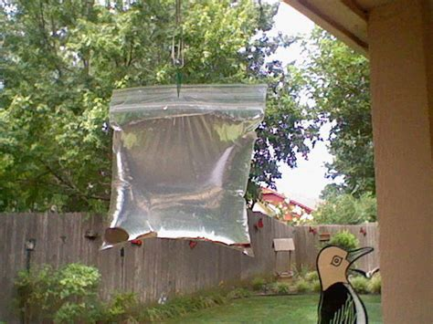 how to keep flies away from backyard how to keep pesky flies away from your bbq