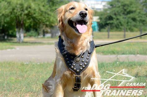 golden retriever harness buy walking harness designer studded harnesses