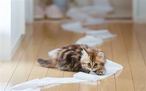 cat wallpaper rolls hd funny animals wallpapers hd animals wallpapers