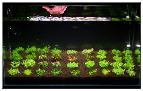 how to set up an aquascape december 2010 aquascape of the month quot invitro scaping