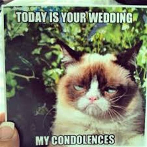 Grumpy Cat Wedding Meme - having fun planning because of my ww quot girls quot weddings