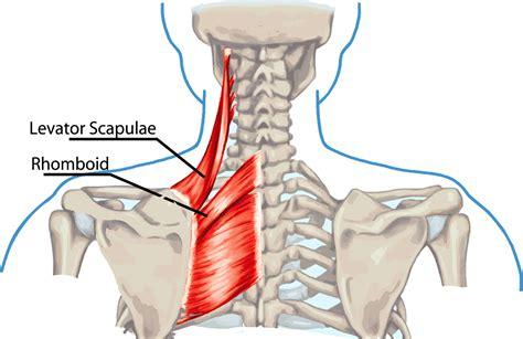 Home Design Center Scottsdale by Back Shoulder And Neck Pain Myideasbedroom Com