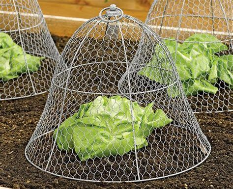 keep pests out of garden 17 best ideas about garden cloche on may 24