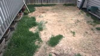 Do Dogs Need Grass Backyard by Backyard Fail Destroys Grass Turf Overseeding Didn T Help