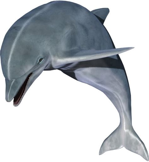 free pictures dolphin hd pictures free stock photos in image format jpg