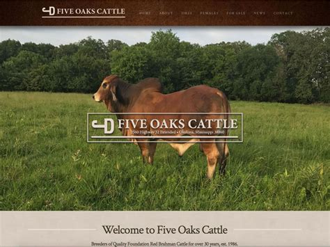 ranch house designs inc five oaks cattle website design ranch house designs inc