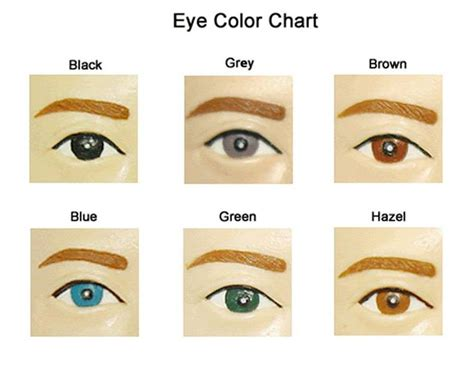 eye color probability eye color probability chart 28 images green are days