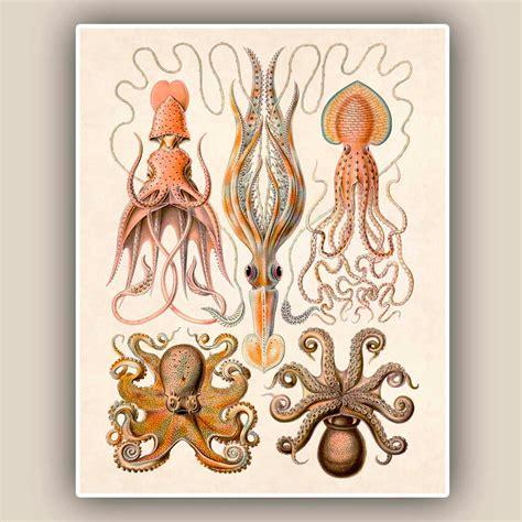 vintage illustration vintage octopus art www pixshark com images galleries