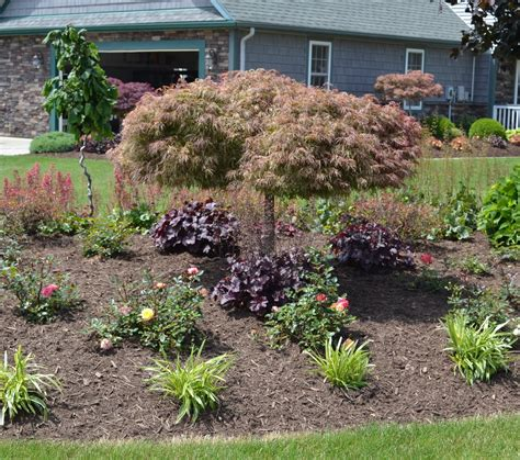 landscaping with maple trees 23 landscaping ideas with photos