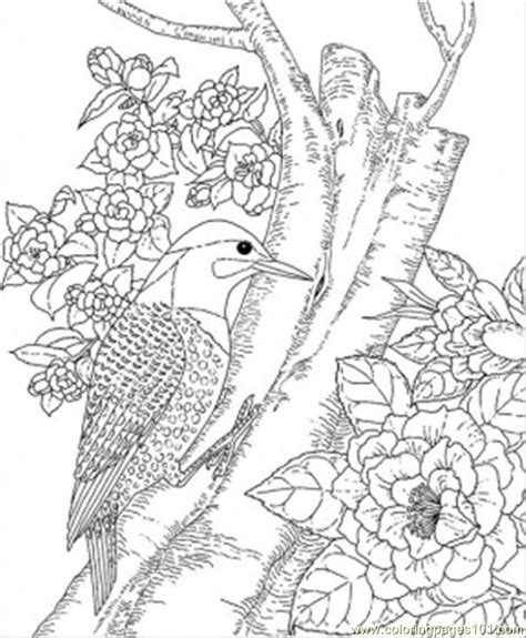 coloring pages of animals and birds state bird coloring pages coloring home