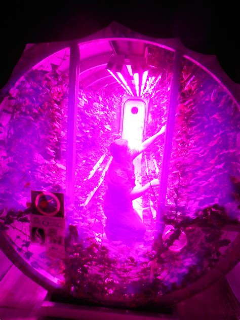 philips led grow light study finds led lights provide improved energy efficiency