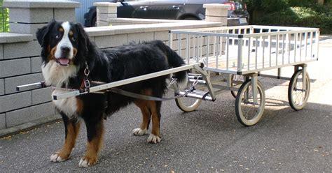 hunde wagen marinesystems hundewagen marinesystems