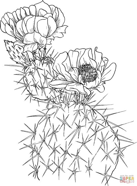 cactus flower coloring page opuntia nopal or prickly pear cactus coloring page free